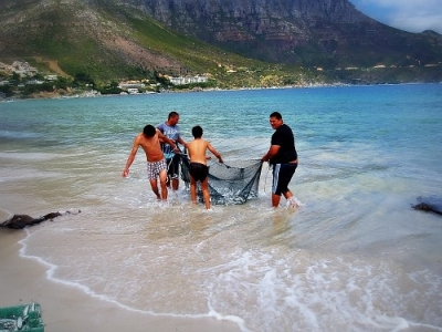 Sardines and springs encourage Cape revivalists