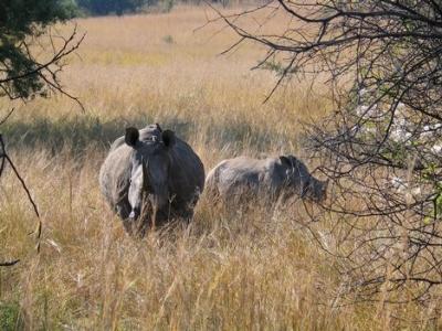 Two more rhino killed. Do we care?