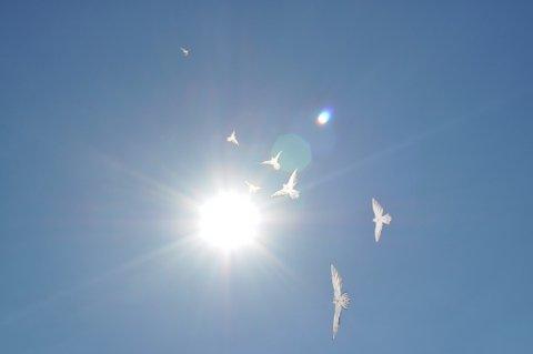 White dove kites in flight -- proclaiming the light of God.