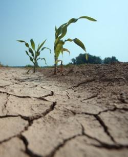 Calls for fervent prayer to break crippling drought
