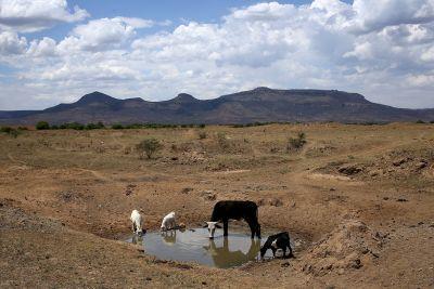 johnny-louw-drought