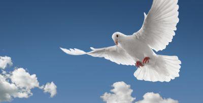 Countdown to Pentecost 2018: Bitterness a roadblock to Holy Spirit — John Osa